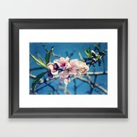 Nectarine Blossoms Framed Art Print