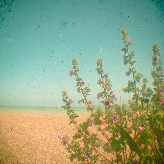 Flowers by the Sea Art Print