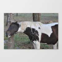 scratching an itch Canvas Print