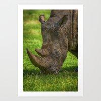 Southern White Rhinoceros Art Print
