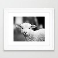 Lamb In Black And White Framed Art Print