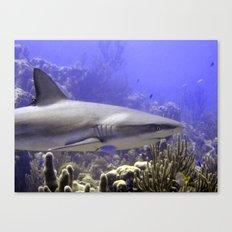 Shark Swimming Past Canvas Print