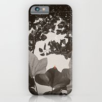 All For The Sun iPhone 6 Slim Case