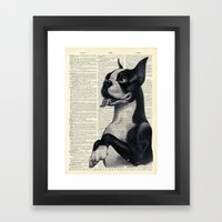 Boston Terrier Framed Art Print