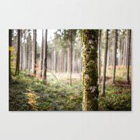 In The Woods I Canvas Print