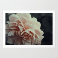 Wildeve Rose No. 2 Art Print