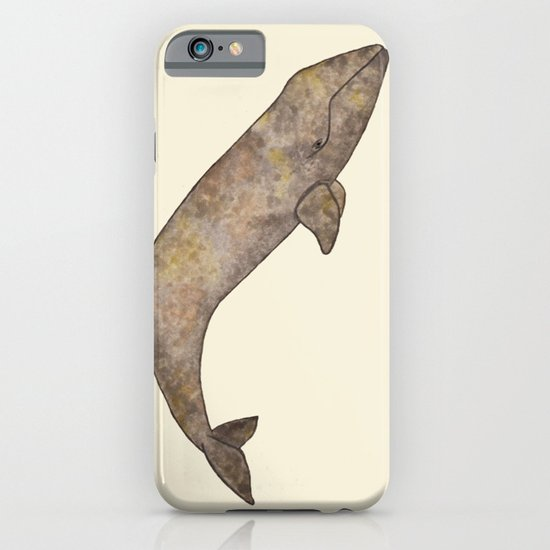 Gray Whale iPhone & iPod Case