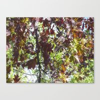 Autumn In Spring Canvas Print