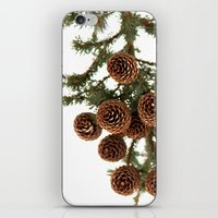 (Spruce Or Fir) Cones iPhone & iPod Skin
