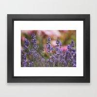 Lavender Flowers Framed Art Print