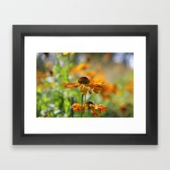 Framed Art Print featuring September Glow by Astrid Ewing