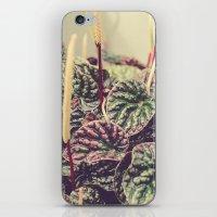 Heart Shaped Leaves iPhone & iPod Skin