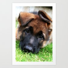 Playful Puppy. Art Print