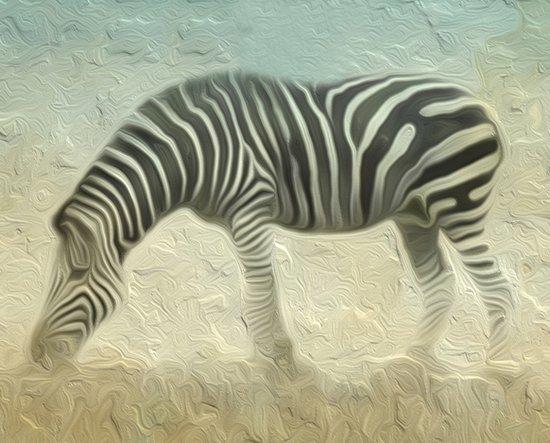 Zebra grazing Art Print