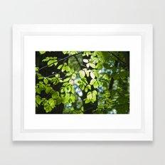 Light in the leaves Framed Art Print