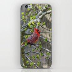 His Majesty the Cardinal iPhone & iPod Skin