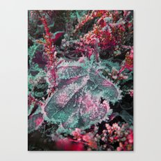 Merry christmas colors Canvas Print