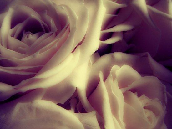 {English Rose} Art Print