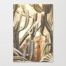 Cactus Jungle Canvas Print