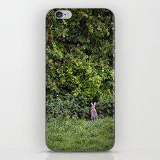 Watership down iPhone & iPod Skin