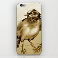 Sparrow With Feather iPhone & iPod Skin