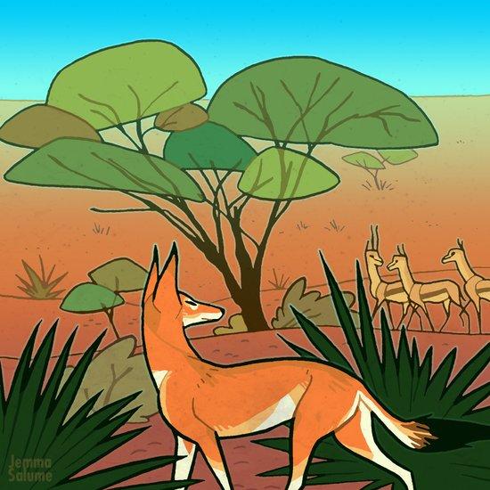Ethiopian Wolf Art Print