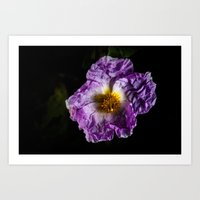 Fragile Flower Art Print