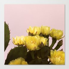 Prickly Pear #1 Canvas Print