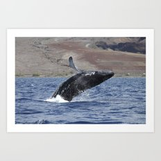 Humpback Calf Breaching Art Print