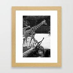 Timeless Giraffe Framed Art Print