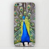 Peacock Display iPhone & iPod Skin