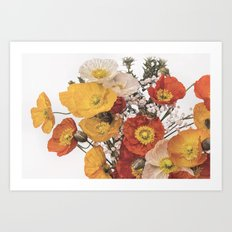 Perfect pastel poppies Art Print