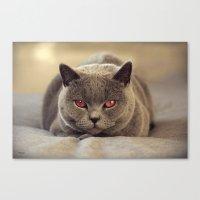 Superstar Diesel The Cat… Canvas Print
