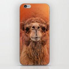 Dromedary Camel iPhone & iPod Skin