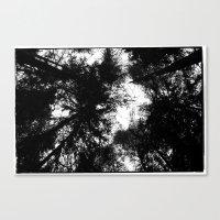 NORWEGIAN FOREST II Canvas Print