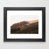 Sheep Grazing On Hillsid… Framed Art Print