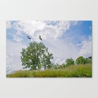 The buzzard tree Canvas Print
