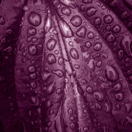 rainy drops II Art Print