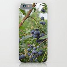 summer fruitful blueberry bushes. blueberry farm photography.  Slim Case iPhone 6s