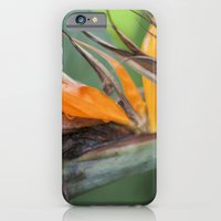 iPhone & iPod Case featuring Bird of Paradise by Mary Kilbreath