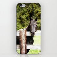 Black Beauty iPhone & iPod Skin
