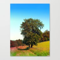 Old Tree, Vibrant Surrou… Canvas Print