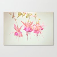 Colors Of Flowers Canvas Print