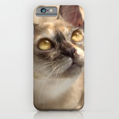 Study of a Cat iPhone 6 Slim Case