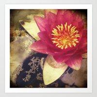 Lotus III Art Print