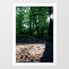 Sunshine through the Woods Art Print