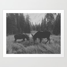 Moose Battle Art Print