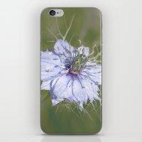 Love-in-a-Mist iPhone & iPod Skin