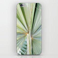 Fanned Palms iPhone & iPod Skin