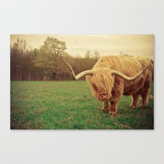 Scottish Highland Steer - regular version Canvas Print